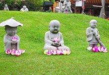 statues de buddha et fleurs de lotus - méditation